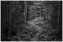 Trail in forest. Voyageurs National Park ( black and white)