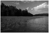 Aquatic grasses, Sand Point Lake. Voyageurs National Park ( black and white)
