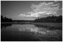 Small arm of Sand Point Lake with aquatic plants. Voyageurs National Park ( black and white)