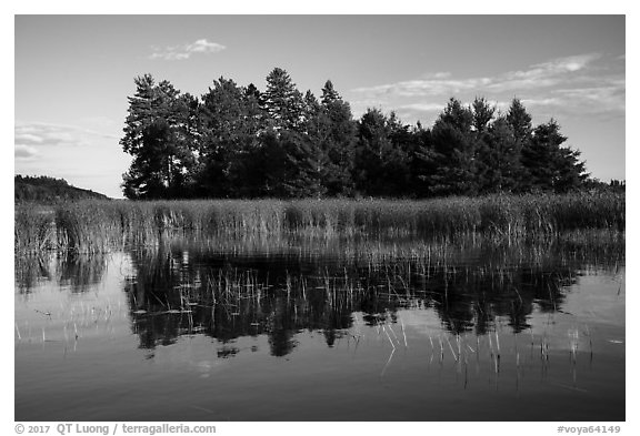 Trees, grasses, and reflections, Northwest Bay, Crane Lake. Voyageurs National Park (black and white)