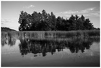 Trees, grasses, and reflections, Northwest Bay, Crane Lake. Voyageurs National Park ( black and white)
