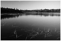 Water grasses and reflections, Northwest Bay, Crane Lake. Voyageurs National Park ( black and white)