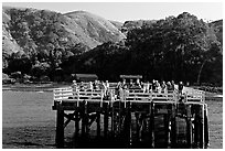 Pier at Prisoners Harbor, Santa Cruz Island. Channel Islands National Park, California, USA. (black and white)