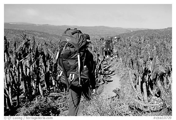 Backpackers amongst giant coreopsis stumps, San Miguel Island. Channel Islands National Park (black and white)