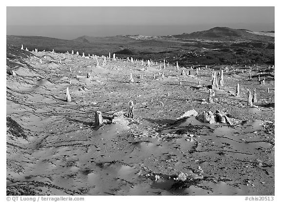Caliche stumps, early morning, San Miguel Island. Channel Islands National Park (black and white)