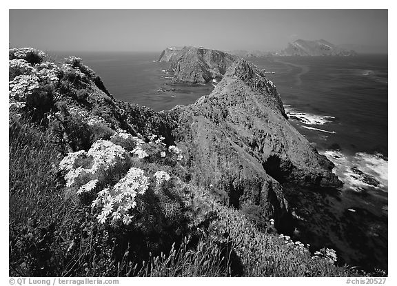 Coreopsis and chain of islands, Inspiration Point, Anacapa Island. Channel Islands National Park (black and white)