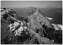 Coreopsis and chain of islands, Inspiration Point, Anacapa Island. Channel Islands National Park, California, USA. (black and white)