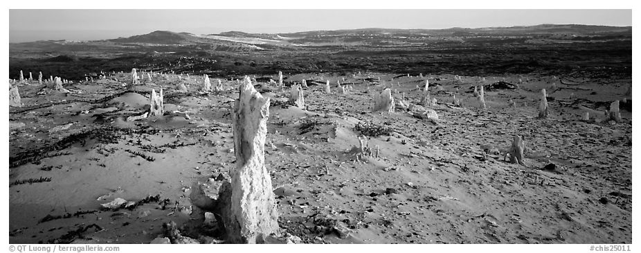 Sand castings on stumps, San Miguel Island. Channel Islands National Park (black and white)