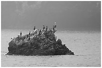 Rock covered with cormorants and pelicans, Santa Cruz Island. Channel Islands National Park, California, USA. (black and white)