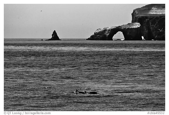 Dolphins and Arch Rock. Channel Islands National Park (black and white)