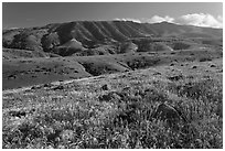 Grasses and Montannon Ridge, Santa Cruz Island. Channel Islands National Park ( black and white)