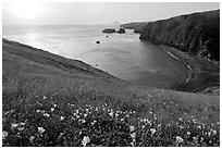 Wild Morning Glories and Scorpion Anchorage, sunrise, Santa Cruz Island. Channel Islands National Park, California, USA. (black and white)