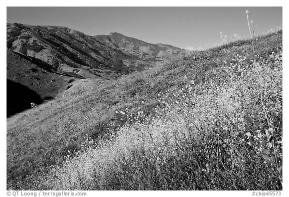 Mustard, grasses, and hills, Santa Cruz Island. Channel Islands National Park (black and white)