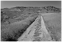 Smugglers Road through green hills in the spring, Santa Cruz Island. Channel Islands National Park ( black and white)
