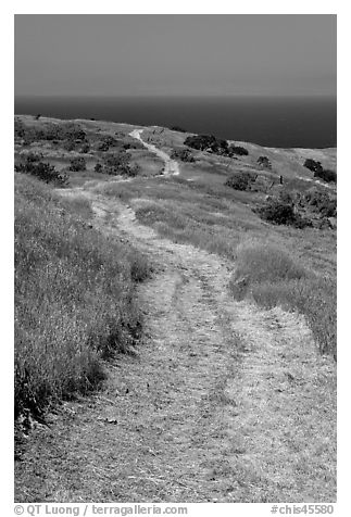 Winding dirt road and ocean, Santa Cruz Island. Channel Islands National Park (black and white)
