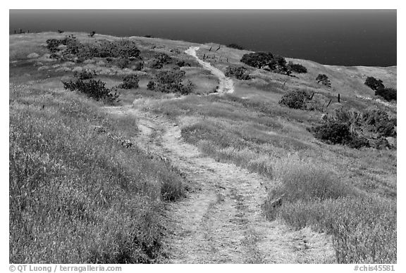 Dirt road through coastal hills, Santa Cruz Island. Channel Islands National Park (black and white)