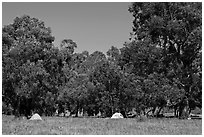 Campground in Scorpion Canyon, Santa Cruz Island. Channel Islands National Park, California, USA. (black and white)