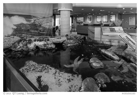 Artificial tidepool inside visitor center. Channel Islands National Park (black and white)