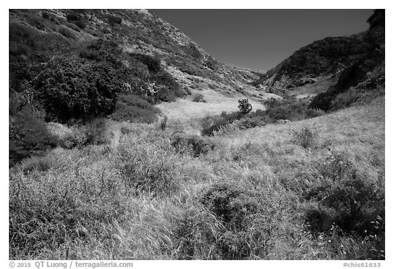 Cherry Canyon, Santa Rosa Island. Channel Islands National Park (black and white)