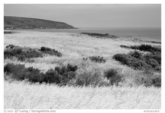 Golden grasses and Bechers Bay, Santa Rosa Island. Channel Islands National Park (black and white)