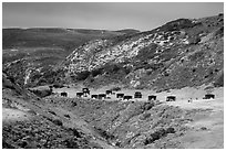 Water Canyon campground, Santa Rosa Island. Channel Islands National Park ( black and white)