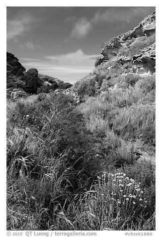 Flowers and rock formations, Lobo Canyon, Santa Rosa Island. Channel Islands National Park (black and white)