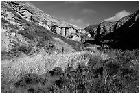 Riparian vegetation and cliffs, Lobo Canyon, Santa Rosa Island. Channel Islands National Park ( black and white)
