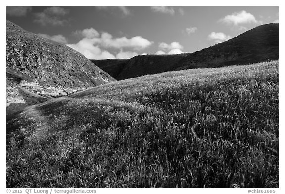 Grassy hillside, Lobo Canyon, Santa Rosa Island. Channel Islands National Park (black and white)