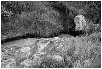 Close-up of stream and vegetation, Lobo Canyon, Santa Rosa Island. Channel Islands National Park ( black and white)