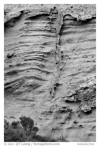 Shrubs and wall detail, Lobo Canyon, Santa Rosa Island. Channel Islands National Park (black and white)