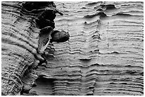 Detail of water-sculptured canyon wall, Lobo Canyon, Santa Rosa Island. Channel Islands National Park ( black and white)