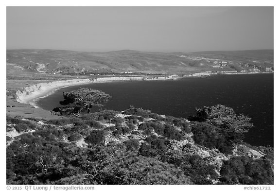 Torrey Pines and Bechers Bay, Santa Rosa Island. Channel Islands National Park (black and white)