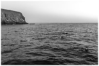Divers surface at dawn, Santa Barbara Island. Channel Islands National Park ( black and white)