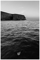 Seabird and Arch Point at dawn, Santa Barbara Island. Channel Islands National Park ( black and white)