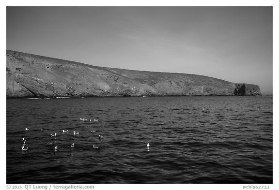 Seabirds and Arch Point, Santa Barbara Island. Channel Islands National Park (black and white)