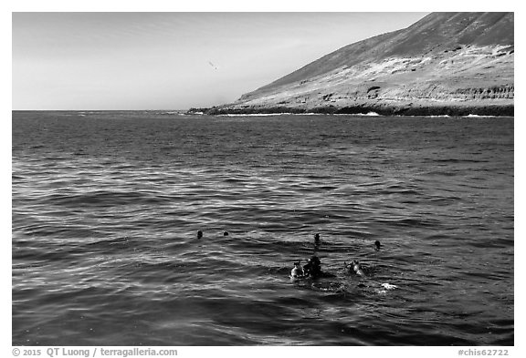 Scuba divers and sea lions on the surface, Santa Barbara Island. Channel Islands National Park (black and white)