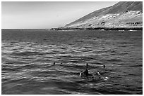 Scuba divers and sea lions on the surface, Santa Barbara Island. Channel Islands National Park ( black and white)