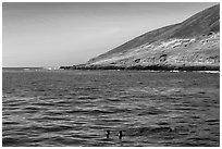 Sea lions and Santa Barbara Island. Channel Islands National Park ( black and white)