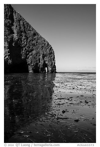 Sea cliff and kelp, Santa Cruz Island. Channel Islands National Park (black and white)