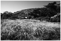 Grasses and former ranch, Scorpion Canyon, Santa Cruz Island. Channel Islands National Park ( black and white)