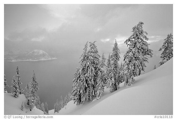 Snow-covered trees and misty lake at sunset. Crater Lake National Park (black and white)
