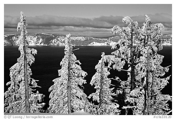 Trees with hoar frost above  Lake. Crater Lake National Park (black and white)