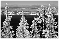 Trees with hoar frost above  Lake. Crater Lake National Park, Oregon, USA. (black and white)