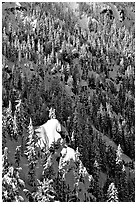 Pine forest on slope in winter. Crater Lake National Park, Oregon, USA. (black and white)