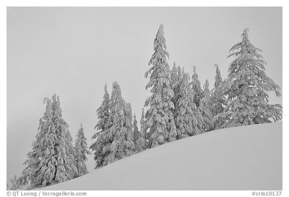 Snow-covered pine trees on a hill. Crater Lake National Park, Oregon, USA.