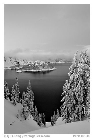 Wizard Island and Lake at dusk, framed by snow-covered trees. Crater Lake National Park (black and white)