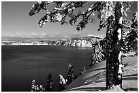 Pine tree with fresh snow on  lake rim. Crater Lake National Park, Oregon, USA. (black and white)