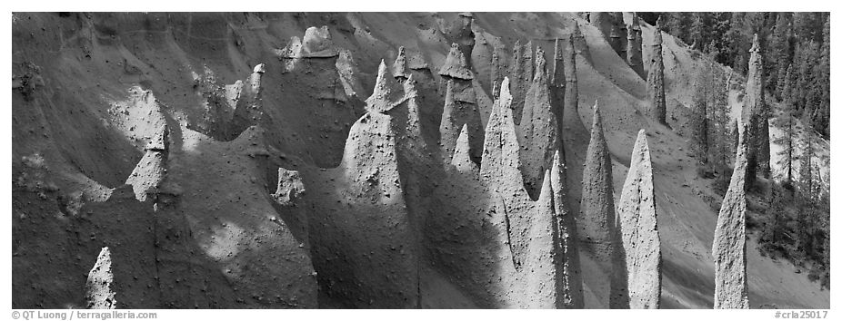Cluster of volcanic columns. Crater Lake National Park (black and white)