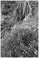 Vidae Falls and wildflowers. Crater Lake National Park, Oregon, USA. (black and white)