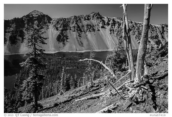 Whitebark pines on top of Wizard Island cinder cone. Crater Lake National Park (black and white)